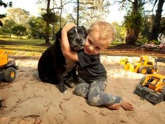 Two Year Old Cheats Death Thanks To His Heroic Dog