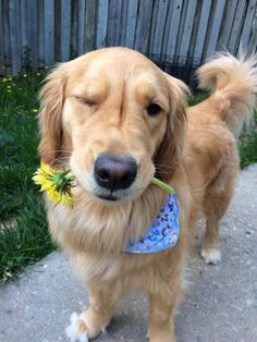 Hey there good lookin...I brought you his flower. Wink! Omg so cute I'm dying!