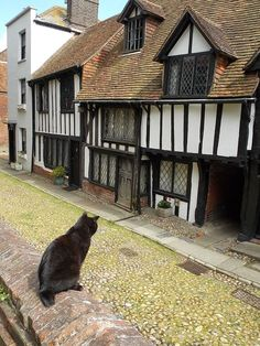 "Kitty-Cat: ""I love the cobbled lanes, and sometimes I'll sit at the window panes in the Medieval half-timbered houses: It espouses my love for Rye which always remains;"" (Poem By: © Lynn Chateau.) Photographed in Rye, East Sussex, England. East Sussex, Rye Sussex, Jard Sur Mer, Rye England, Cute Cats, Funny Cats, Uk Photos, Interesting Buildings, Most Haunted"