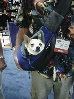 Found this little guy roaming around Super Zoo in our Wacky Paws Pet Sling! so cool!