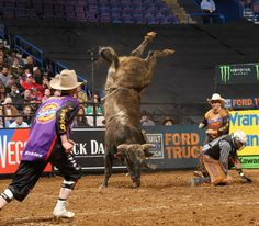Rank shot of Jesse (purple), Frank (orange), a bull I can't remember the name of, and a rider I don't recognize.