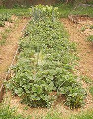 Control de plagas en la huerta orgánica