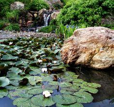 Quarryhill Botanical Garden - Santa Rosa, CA (Sonoma wine country)