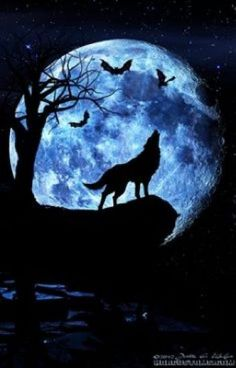 Wolf howling at the moon, composite art. – Mathilde Sakura Wolf howling at the moon, composite art. It's a wolf moon tomorrow night. What rituals are my witchey friends doing? Artwork Lobo, Wolf Artwork, Beautiful Wolves, Beautiful Moon, Wolf Tattoos, Tier Wolf, Wolf Painting, Mirror Painting, Blue Painting