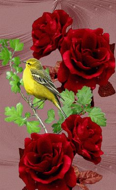 Animated Birds page these are my collection of gifs from the web, Iam unable to mention the site's names since these were all collected . Flowers Gif, Pretty Flowers, Roses Gif, Pretty Birds, Beautiful Gif, Beautiful Roses, Beautiful Pictures, Gif Bonito, Beau Gif
