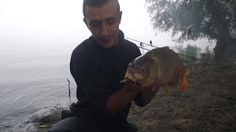 Pescuit La Dunare: Nadirea la Crap pe Dunare si in Delta Dunarii