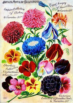 Bruce's Collections Vintage Flowers Seed Packet Catalogue Advertisement Poster | eBay