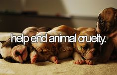 I would love to be a volunteer at an animal shelter