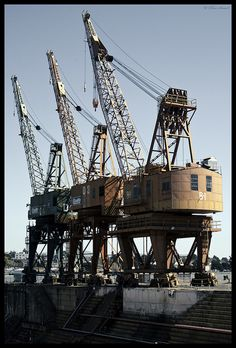 Cranes on Mare Island We call them cranosauruses because they are so huge.