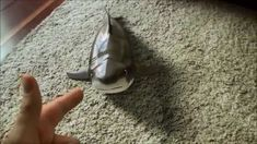 Shark toy again. REAL or NOT