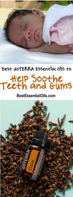 You may want to try some essential oils to help sooth teeth and gums and clove essential oil is the most recommended. It is suggested to first mix clove with fractionated coconut oil, then dab a Myrrh Essential Oil, Doterra Essential Oils, Essential Oil Blends, Doterra Myrrh, Essential Oils For Teething, Essential Oils For Babies, Baby Teething Remedies, Teething Relief, Elixir Floral