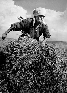 Robert Capa - International Center of Photography - Ucrania. De agosto de 1947. Mujer recogiendo un paquete de heno en una granja colectiva