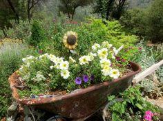 How to Plant a Rusty Wheelbarrow for the Garden