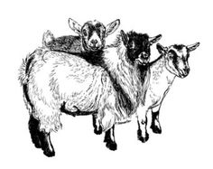 Popular items for pygmy goat drawings on Etsy