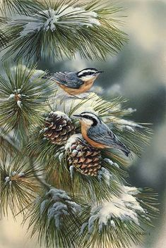 """Rosemary Millette Limited Edition Print: """"Winter Gems-Nuthatch"""" Bird Pictures, Pictures To Paint, Christmas Bird, China Painting, Watercolor Paintings, Watercolor Bird, Watercolors, Original Paintings, Pine Tree Painting"""