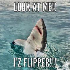 Hehe Photo credit : Hannah Milankovic Dangerous Animals, Great White Shark, Shark Week, Funny Signs, Sharks, Make Me Smile, Fur Babies, Whale, Hilarious