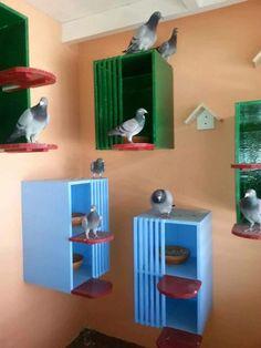 حمان الزاجل Pigeon Nest, Pigeon Cage, Pet Pigeon, Dove Pigeon, Pigeon Bird, Pigeon Loft Design, Diy Bird Cage, Pigeon House, Homing Pigeons