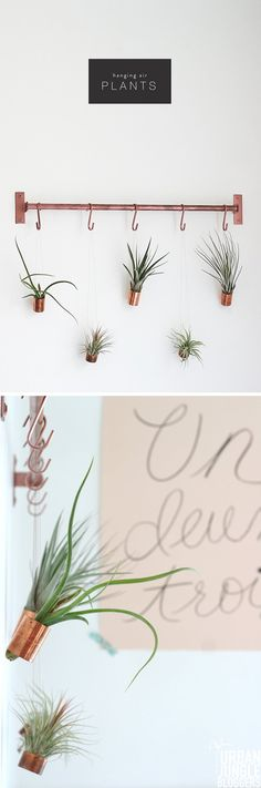 DIY Bathroom Decor Projects | Hanging Air Plants by DIY Ready at http://diyready.com/bathroom-decorating-ideas-on-a-budget/