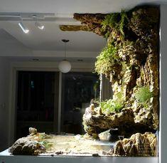 Nature Aquarium, Home Aquarium, Aquarium Design, Reptile Room, Terrarium Plants, Ponds Backyard, Freshwater Aquarium, Fish Tank, Indoor Plants