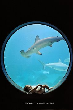 Awesome baby photo, aquarium photo, baby, baby watching shark, hammerhead shark, unique baby photo.
