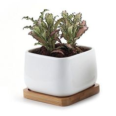 T4U 3.75 Inch Ceramic White Square NO.2 succulent Plant Pot/Cactus Plant Pot With Bamboo Tray