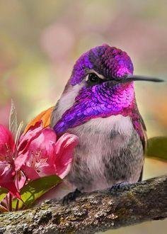 Beautiful creatures, animals and pets, beautiful birds, pretty birds, ani. All Birds, Little Birds, Love Birds, Pretty Birds, Beautiful Birds, Animals Beautiful, Exotic Birds, Colorful Birds, Animals And Pets