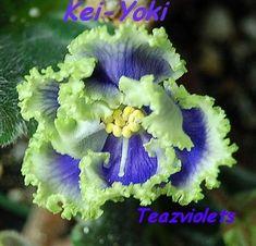 Kei-Yoki