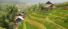 Senderos para caminar entre arrozales. Encantadores caminos serpentean entre las plantaciones de Sapa, el oasis verde de Vietnam. Completa l...