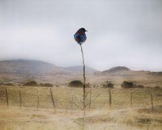 Interesting bird photography from Jean-Luc Mylayne.