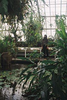 LKF: Conservatory of Flowers...aka my dream!!!
