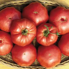 "Tomato Brandywine ""Sudduth's""- Heirloom 1886- Origin Pennsylvania Quaker- Growth is indeterminate- Variety beefsteak- These are oval shape dark pinkish-red, light creamy meat flesh large 12oz.-2# fruit. The flavor is full of the deep, earthy and sweet flavor that has made other heirloom tomatoes so popular today. Use for salsa, fresh and cooking."