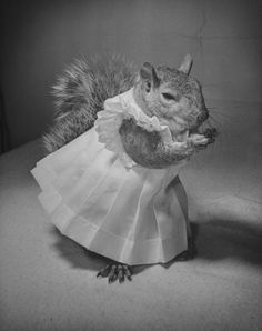 Hellooo Ladies Squirrel Funny Metal Sign I Love Squirrels - Student befriends campus squirrels then dresses them in the cutest outfits ever