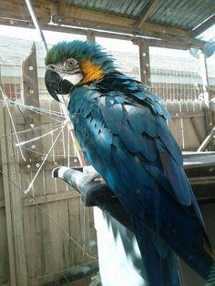 Pet Raven, Crow, Creatures, Cottage, Marvel, Birds, Sea, Nature, Baby