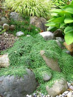 Créez un espace de verdure dans votre jardin de rocaille ...