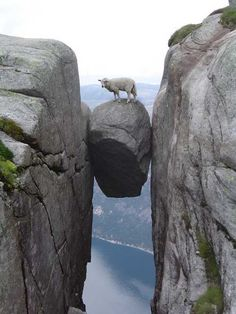 Sheep on a Rock