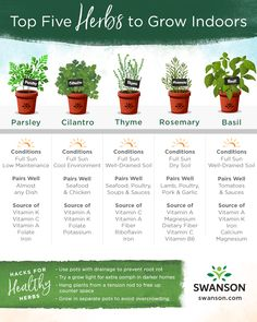 Top 5 Herbs to Grow Indoors - Awesome Infographics - Fresh herbs can turn simple dishes into something special. You don't need a ga - Parsley Plant, Cilantro Plant, Basil Plant, Rosemary Plant, Best Herbs To Grow, How To Grow Parsley, Growing Herbs Indoors, Plants To Grow Indoors, Indoor Herbs