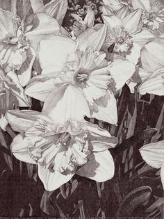 This is a graphite pencil drawing of daffodil flowers after my photo. It is a part of series RHYTHM OF NATURE. Beauty of organic shapes and live rhythm created by variety of forms in nature is mos. Landscape Pencil Drawings, Pencil Drawings Of Flowers, Art Drawings, Rhythm Art, Nature Drawing, Daffodils, Daffodil Flowers, Flowers Nature, Conceptual Art