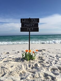 Threw in some orange flowers because it's her favorite color. I was pretty happy with how the signs stuck out on the beach.