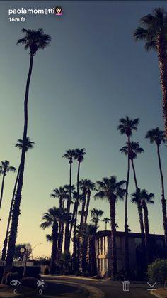 Palm life🌴❤️