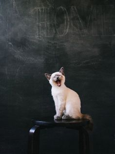 Dying of cute   school room kitten