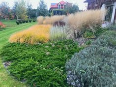 Ornamental Grasses, Studio, Plants, Studios, Plant, Planets