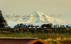 Mt. Hood, as seen from Scappoose. Mt. Hood Territoryis one of Maria Echaniz's favorite places because of its proximity to Portland and the breathtaking views. To plan your next trip there, g…