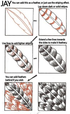 Zentangle feather step by step