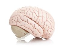 Brain Health Training:  Scientists doubt the claims of brain training companies