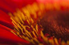 Flower colors ... up close.