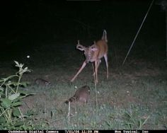 Trail Cam Bloopers!
