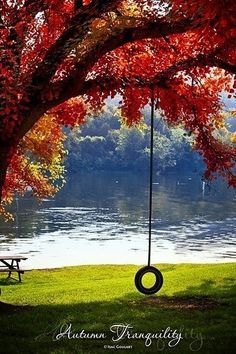 From southern life beautiful - southern life in the deep south, spring, summer fall and winter.... memories of that tire swing is wonderful