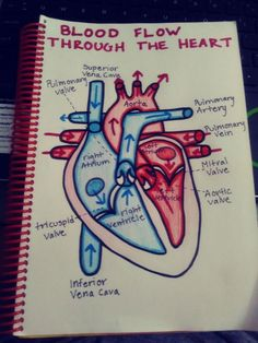 What do you guys think? Life Hacks For School, School Study Tips, Nursing School Notes, Nursing Schools, Heart Diagram, Biology Lessons, Science Notes, Medical Anatomy, Human Anatomy And Physiology