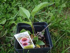 Survival Skills: 14 Wild Medicinal Plants | Outdoor Life