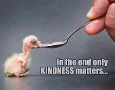 In the end, only kindness matters life quotes quotes quote kindness kind Kindness Matters, Kindness Quotes, Faith In Humanity, Animal Quotes, Good Advice, Life Lessons, Wise Words, Positive Quotes, Quotations